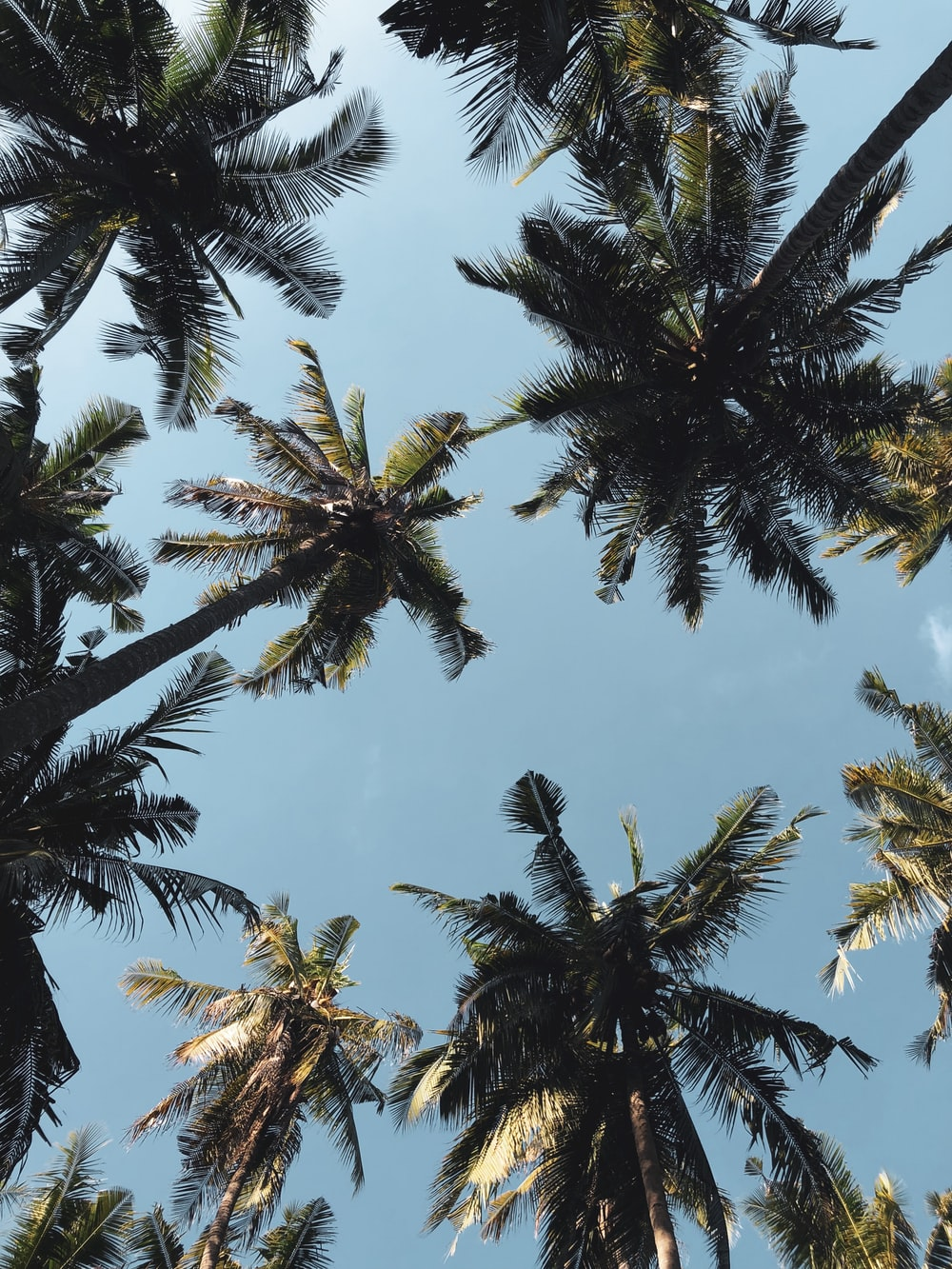 low angle photography of coconut trees