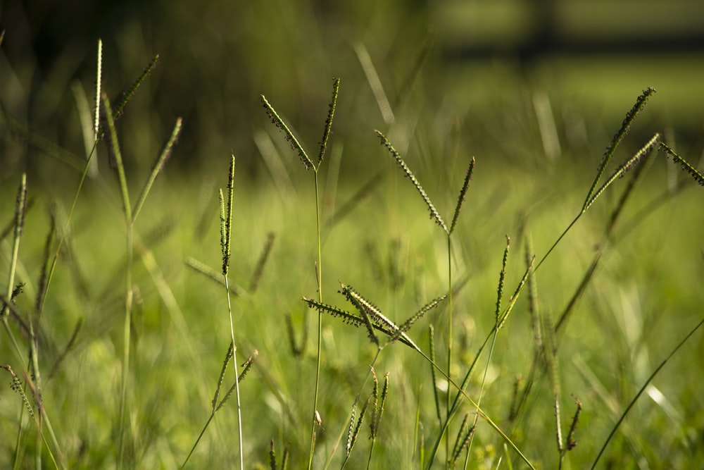 shallow focus photography of assorted grass