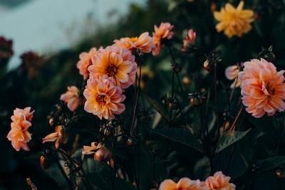 orange flowers atmospheric zoom background
