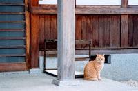 orange tabby cat sitting on pavement near psot