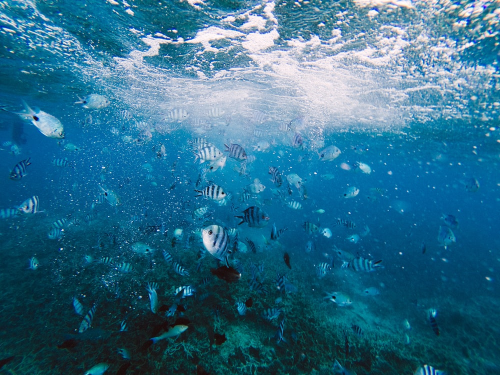 gray and white fish in underwater at daytime