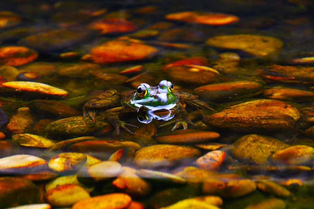 frog sitting on stone surrounded by body of water