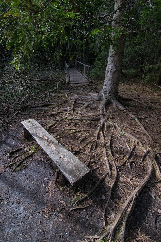 empty brown wooden bench near tree