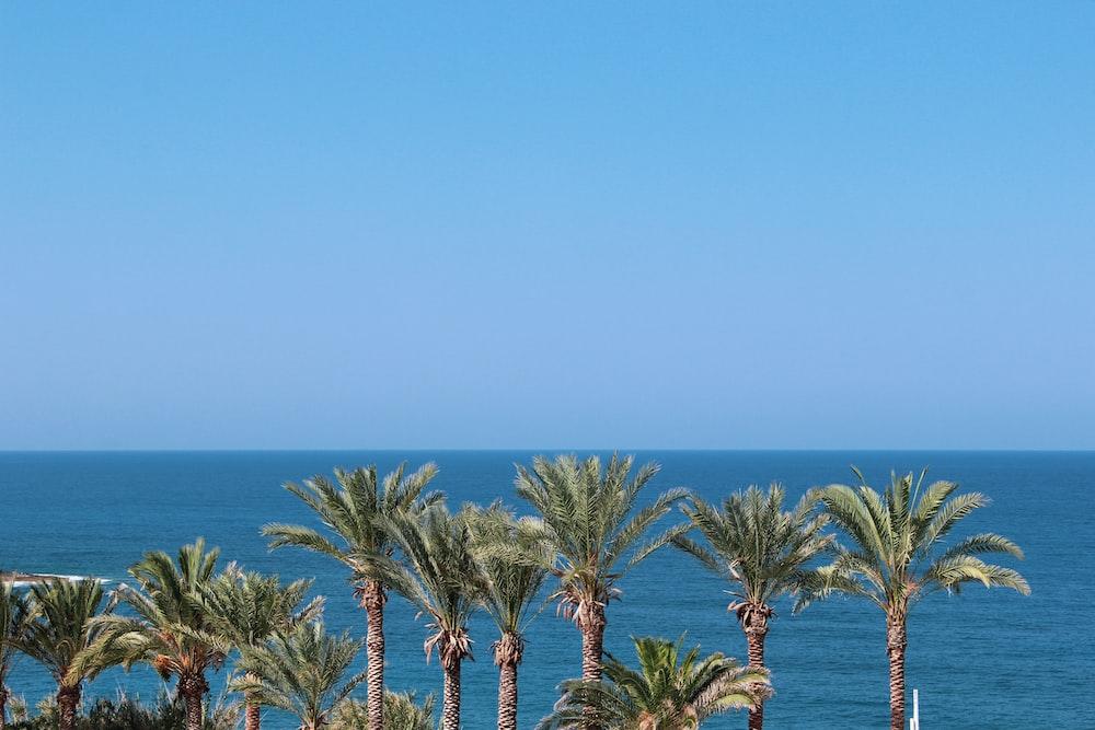 sago palm near body of water