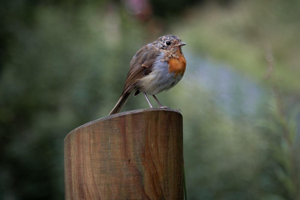 shallow focus of brown bird