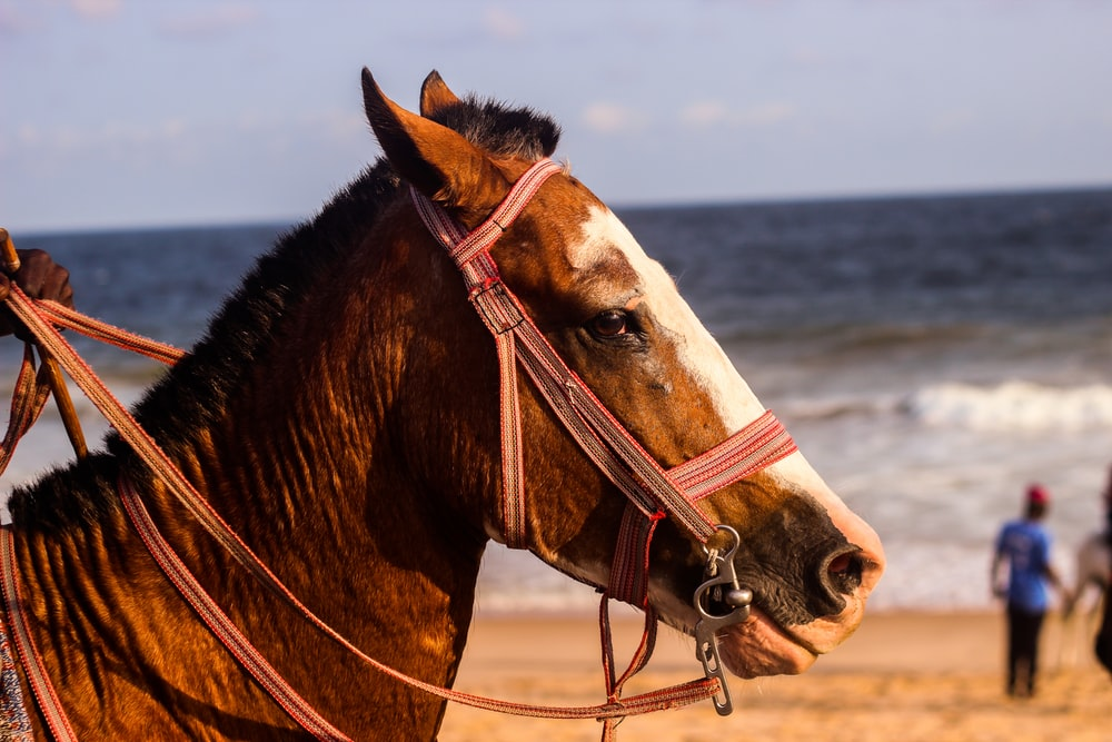shallow focus photography of brown horse near seashore