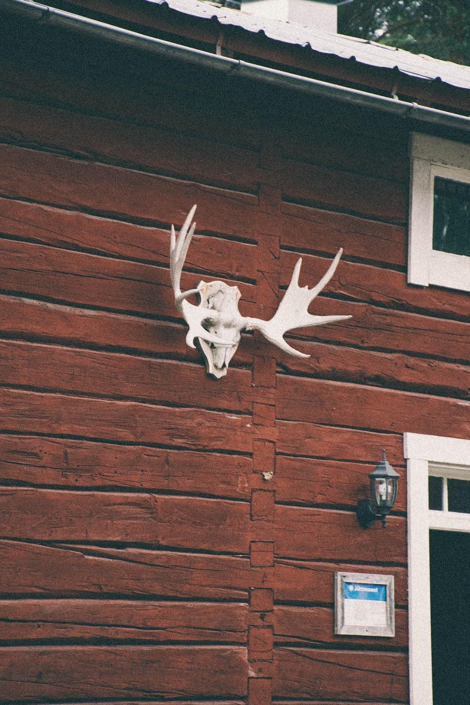 white buck skull on wall
