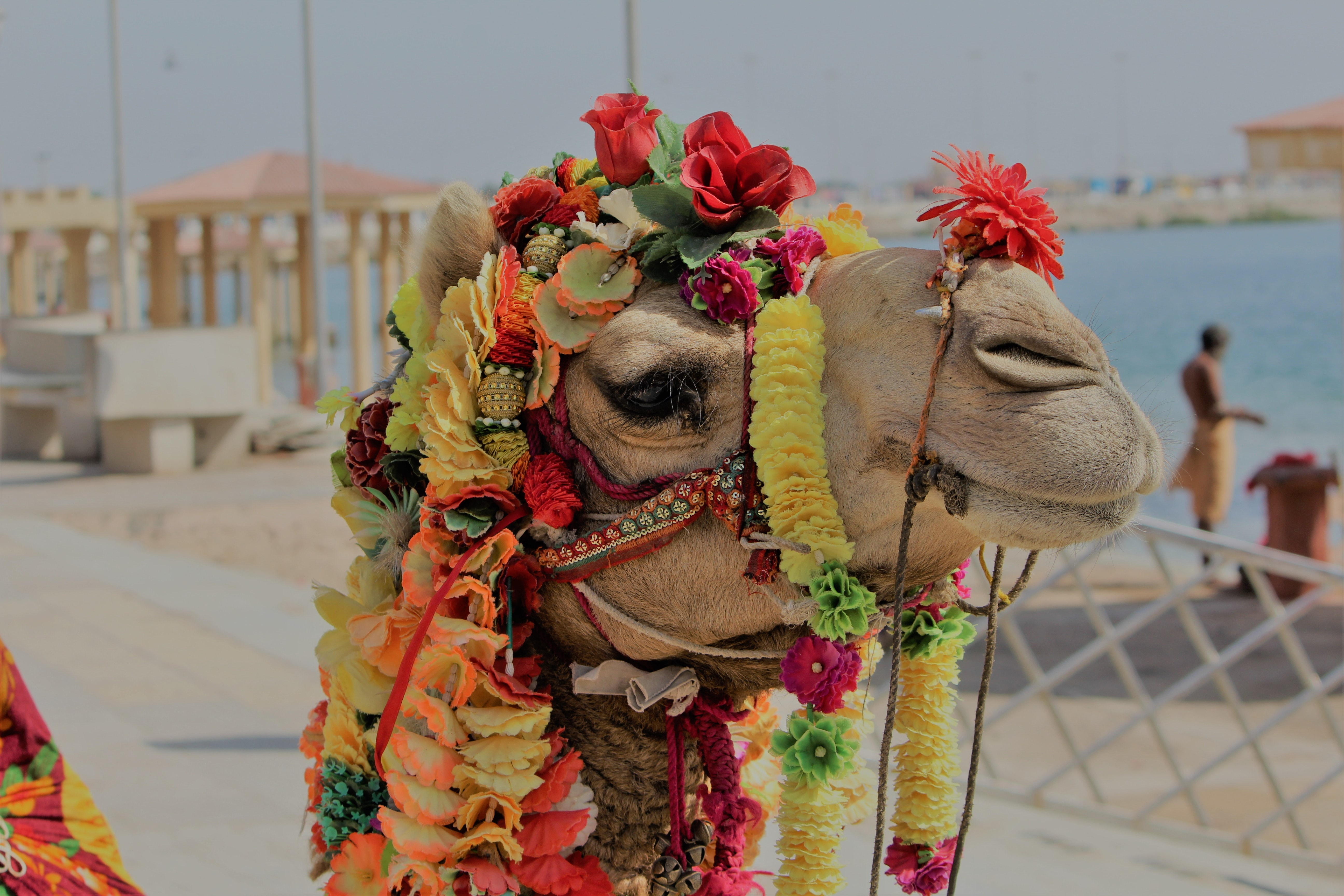 camel with flower decorations