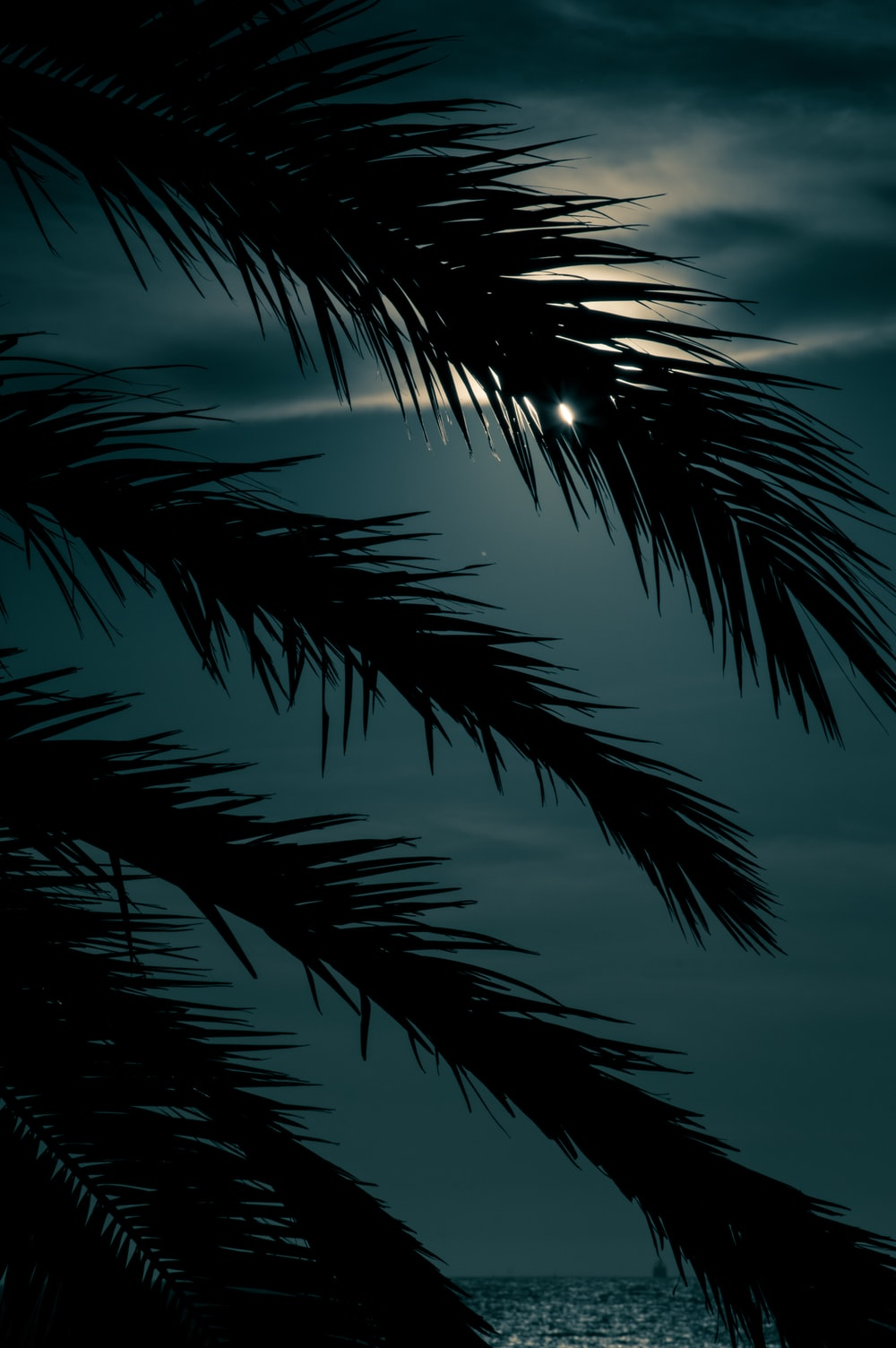 silhouette of palm tree at night time