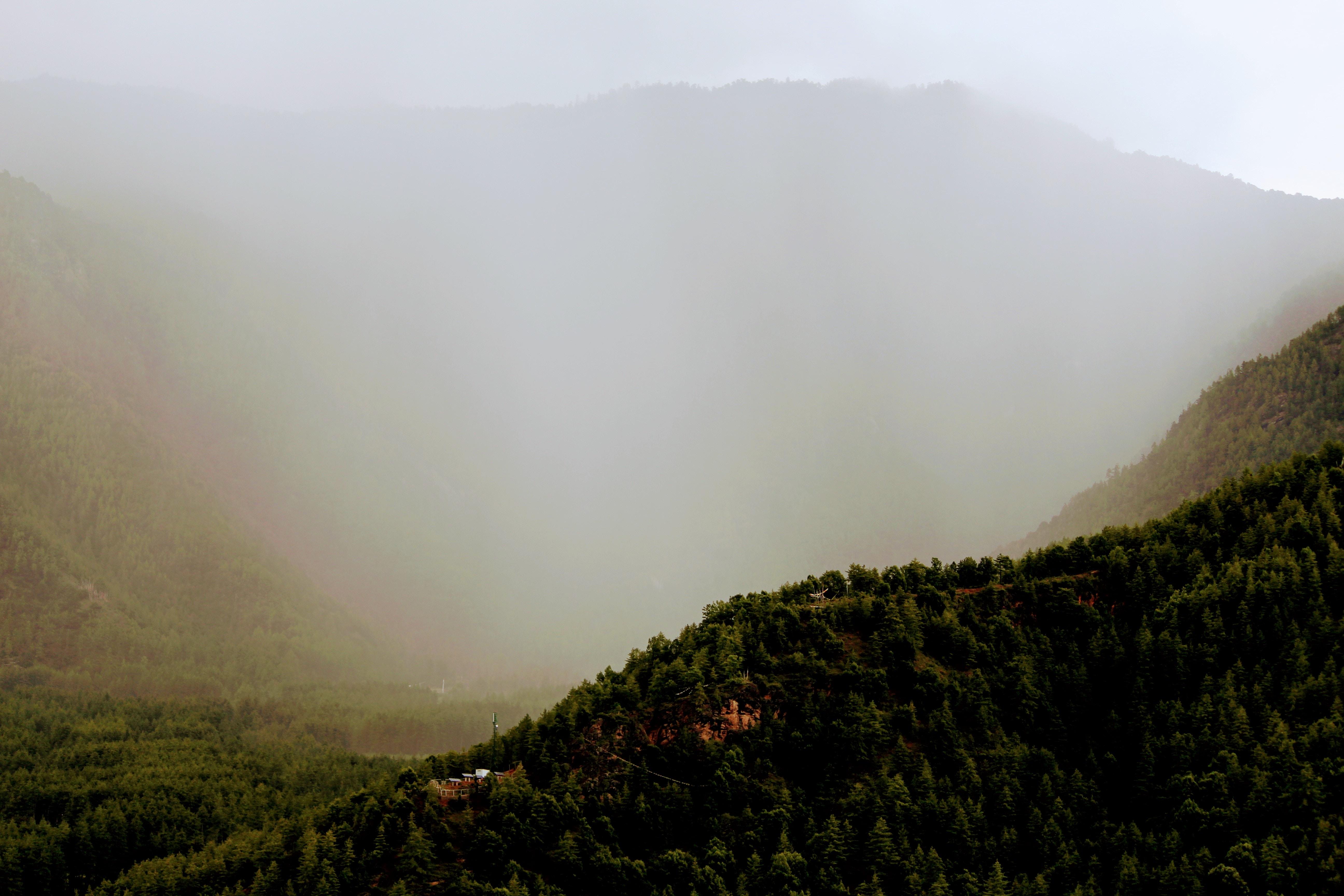 trees near mountain during daytime