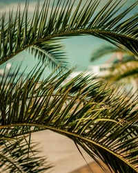 close up photography of green palm tree