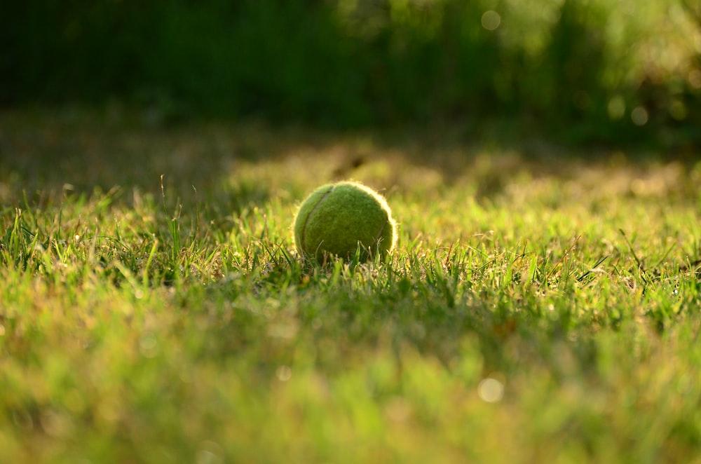green tennis ball on green grass