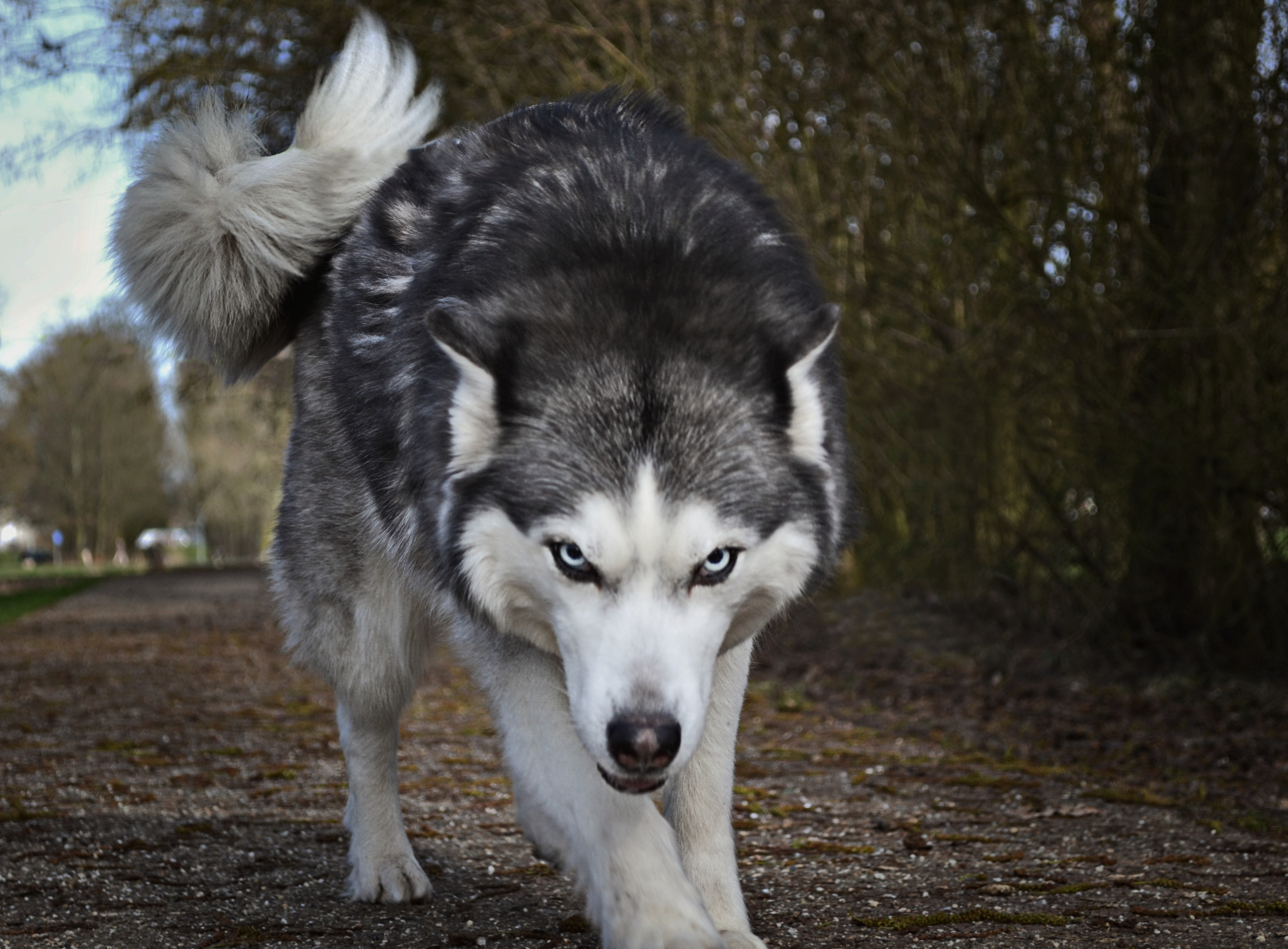 best 100  wolf pictures  hd