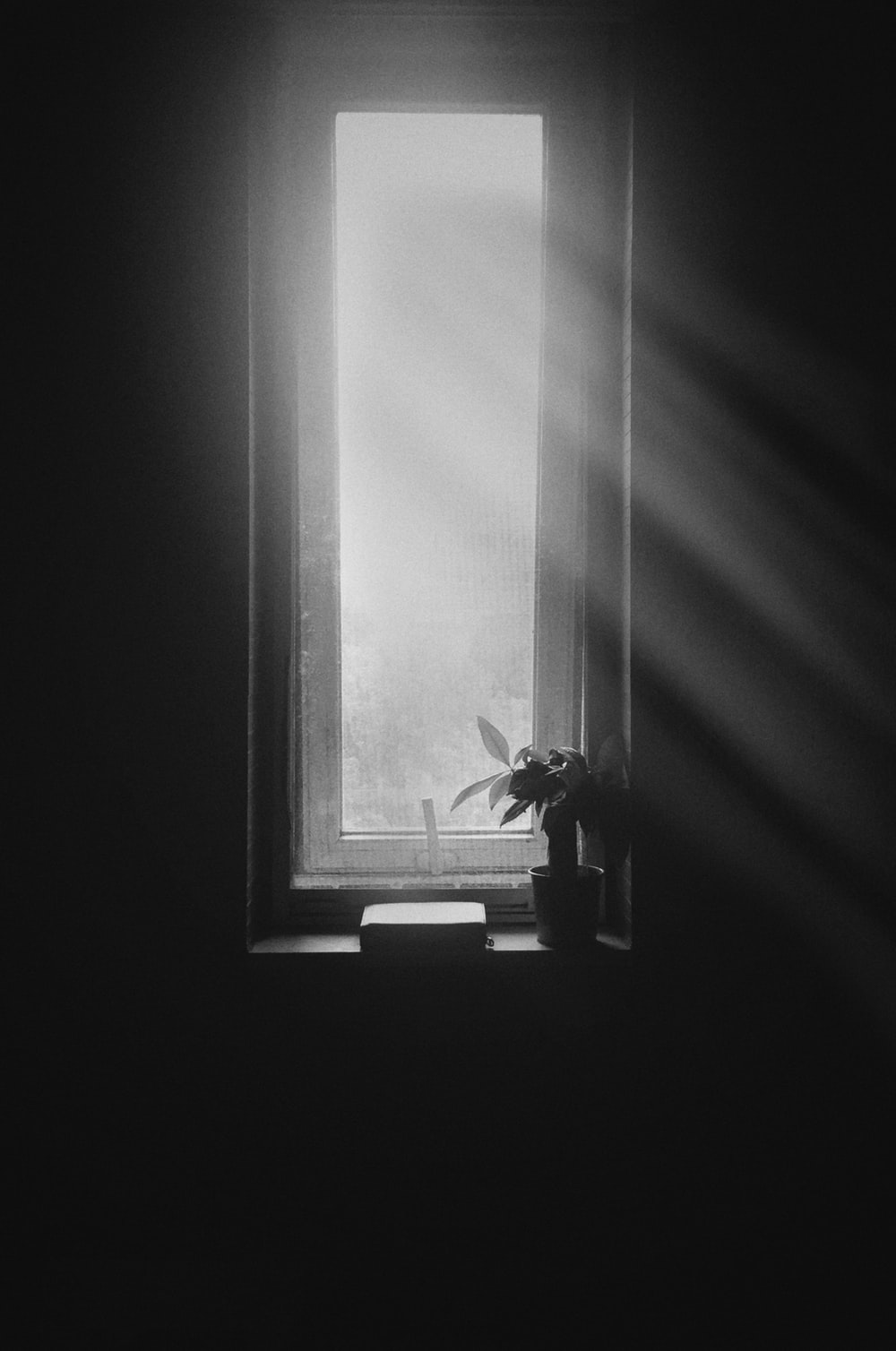 grayscale photography of plant on window