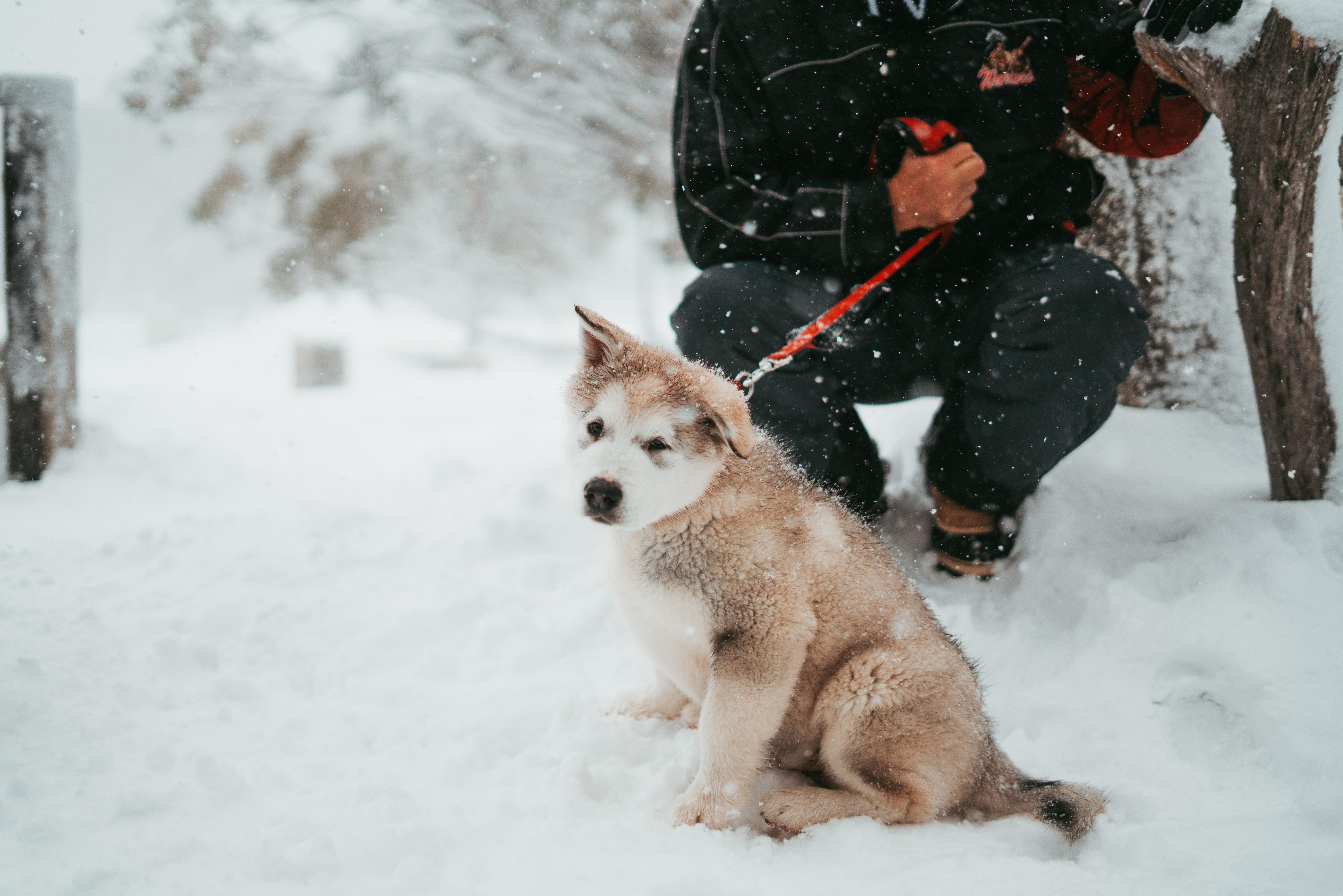 pet dog sitting down on snow