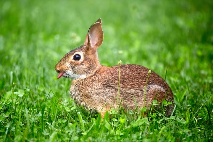 Bunnies Don't Care About Marigolds