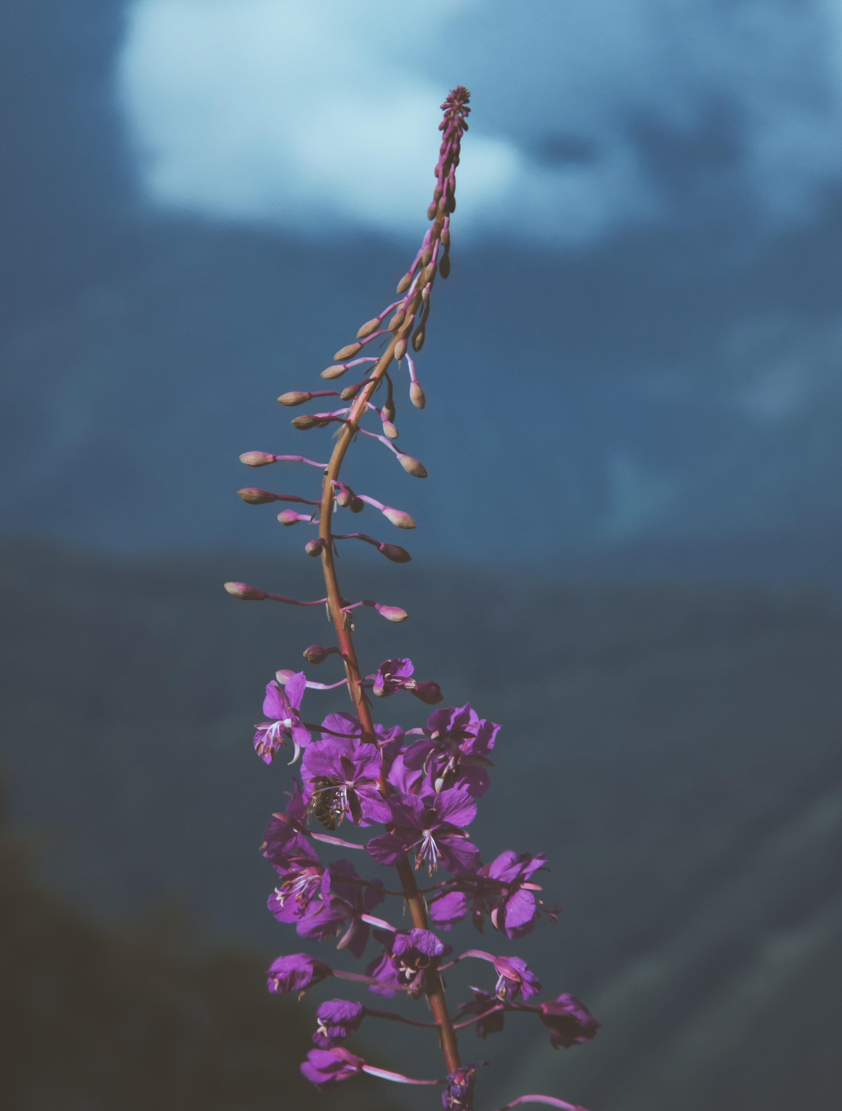 person showing purple flower