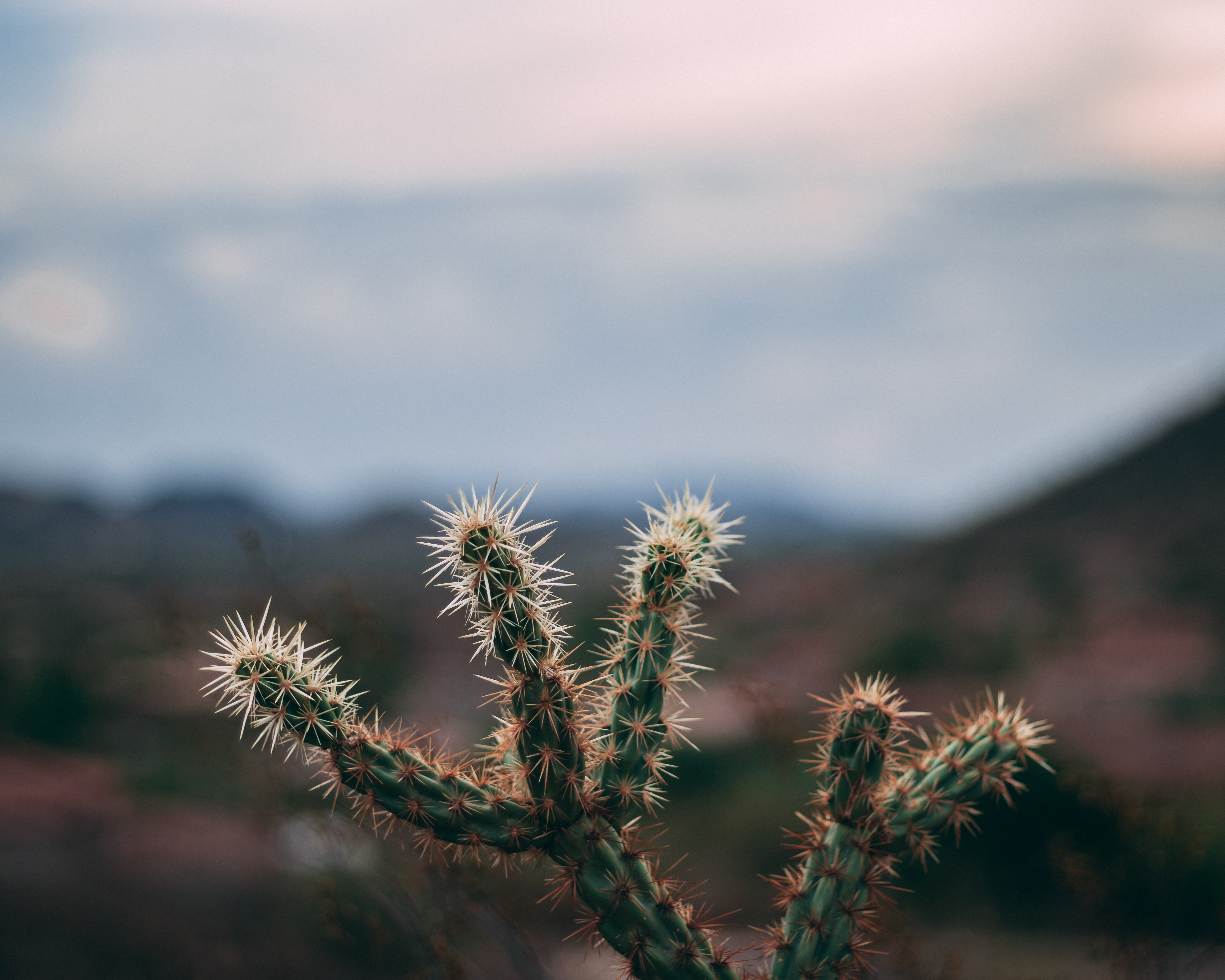 shallow focus photography of green cactus