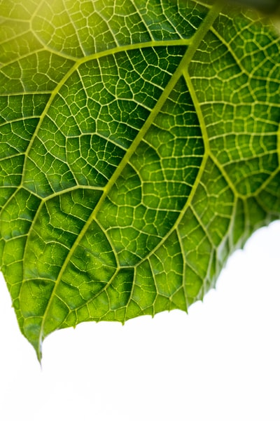 macro photography of green leaf