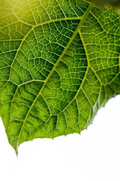 macro photography of green leaf