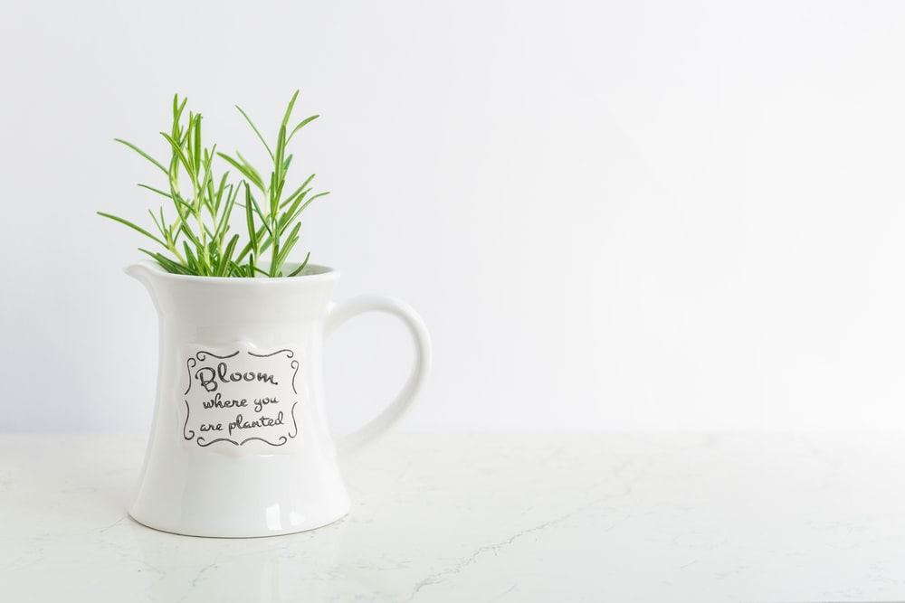 green potted plant