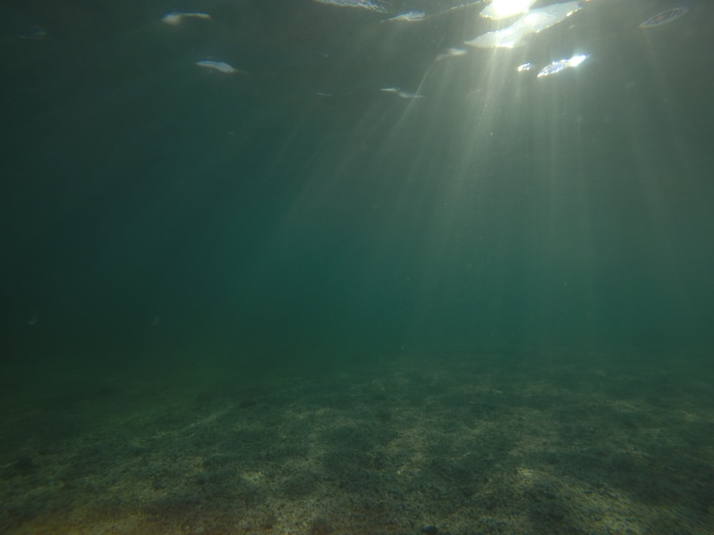 sunlight on shallow water