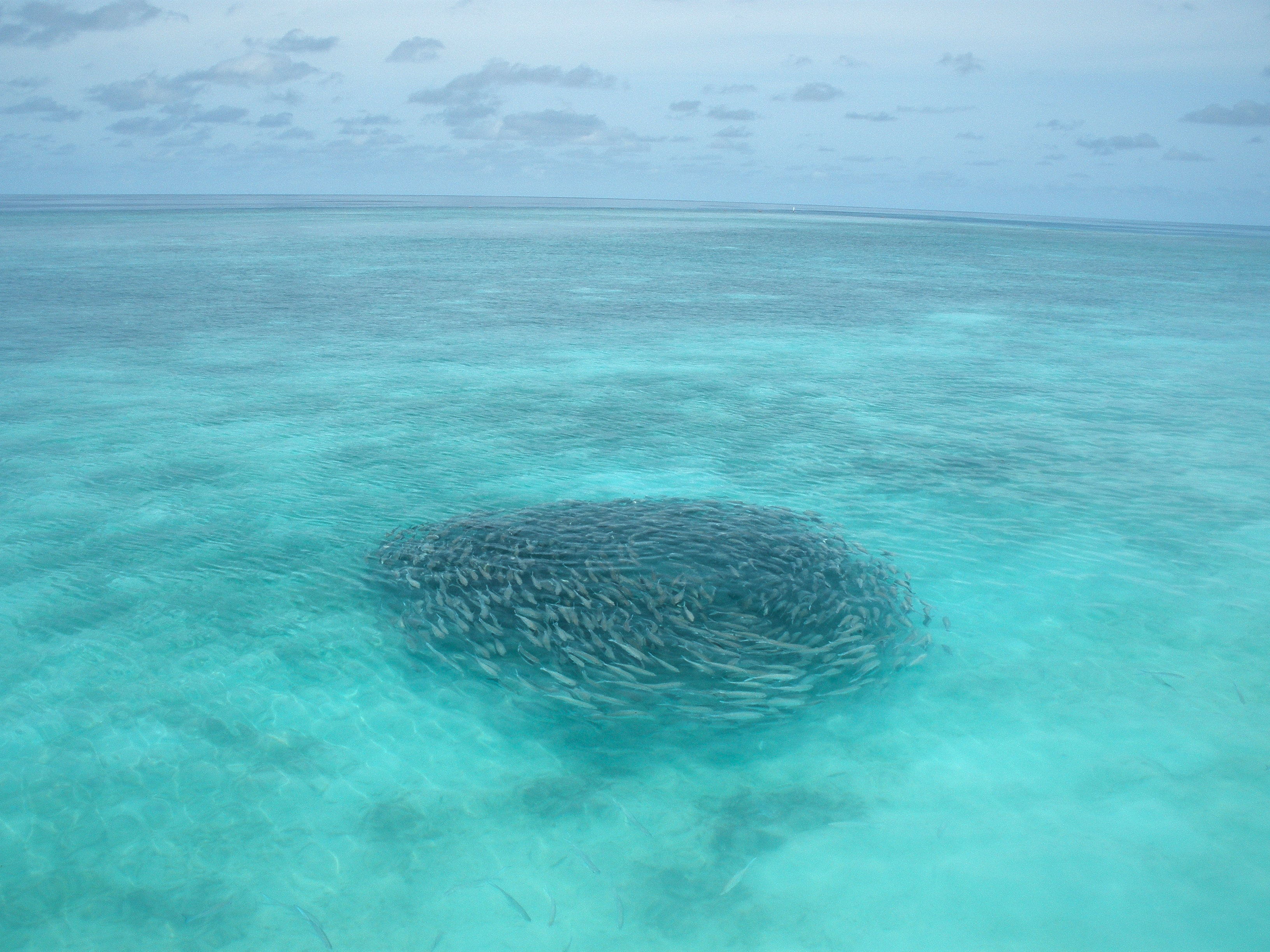 school of gray fish in body of water