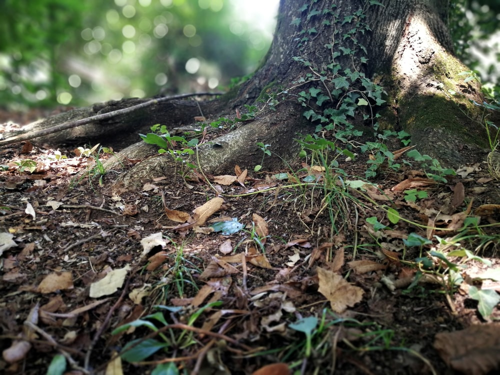 tree trunk surrounded with dried leaves