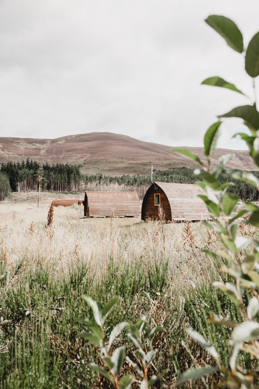 bard houses on open field