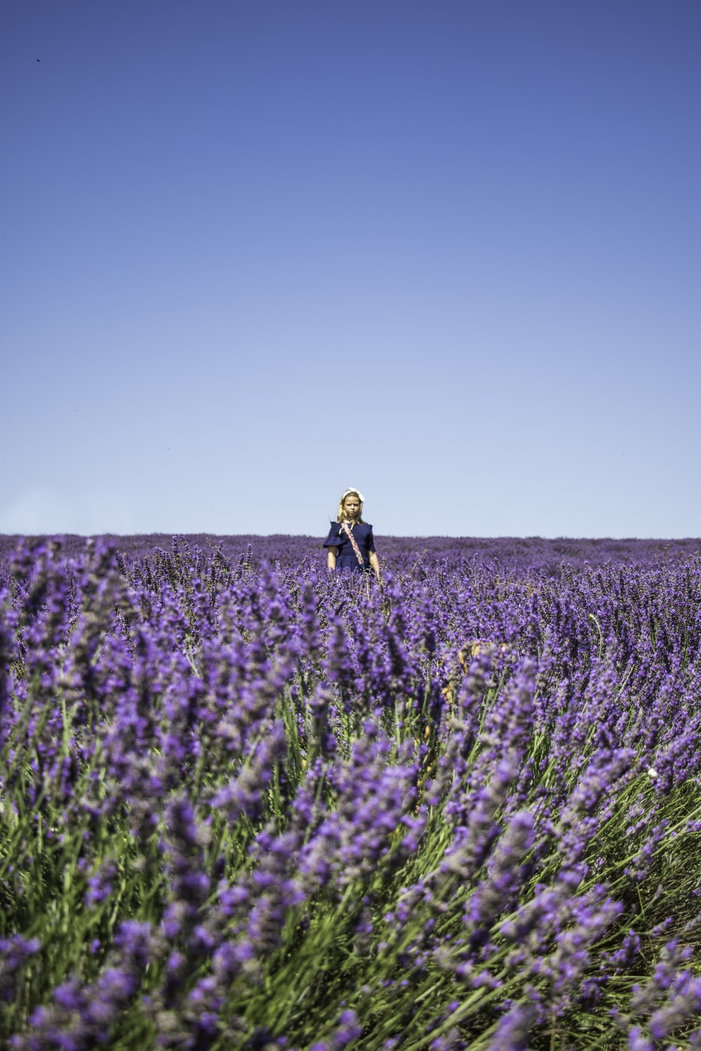 person standing in lavender field