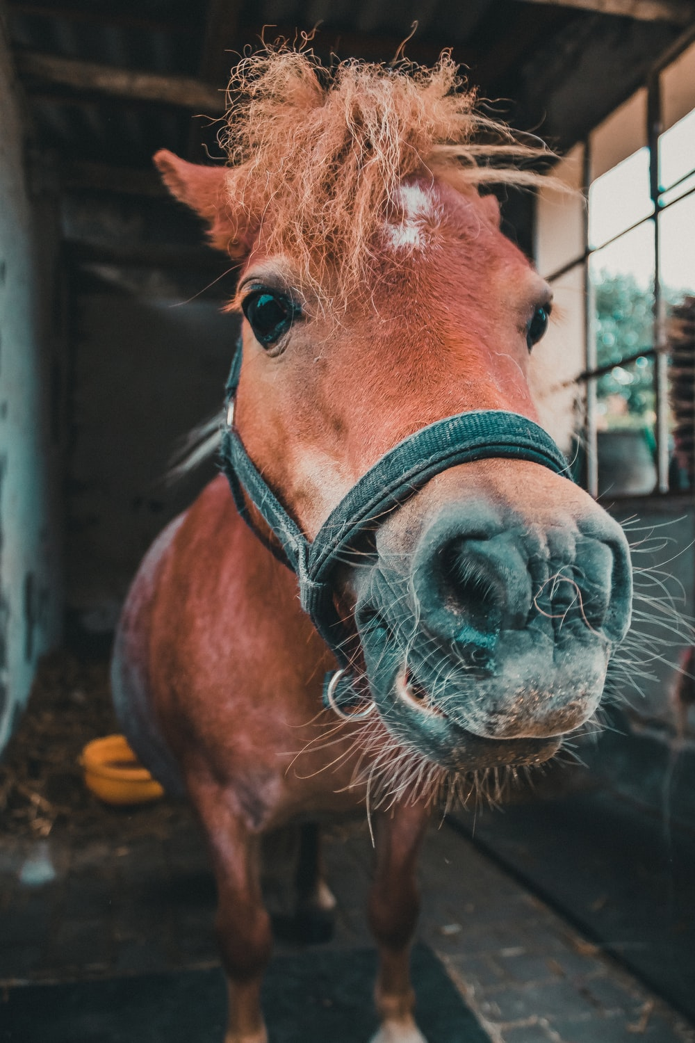 brown horse with black harness