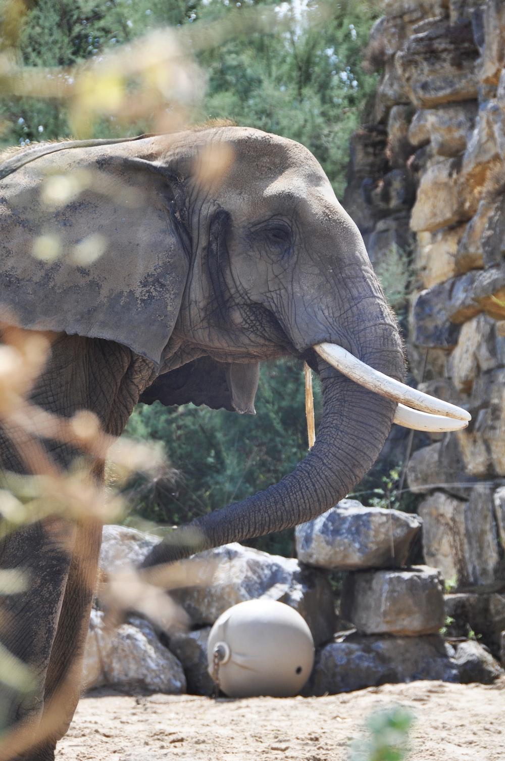 elephant near wall