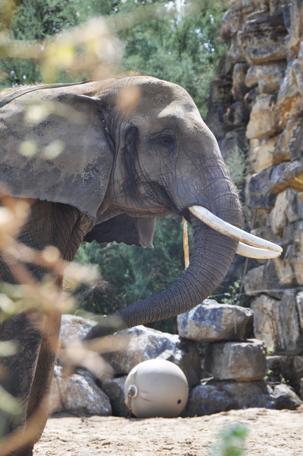 elephant near wall
