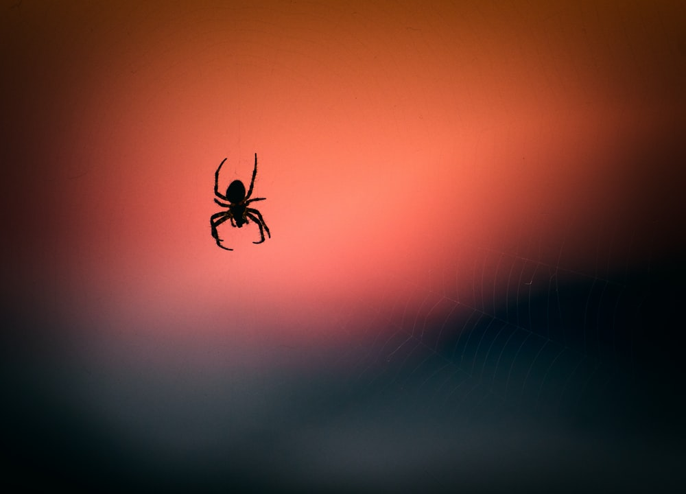 silhouette photography of spider