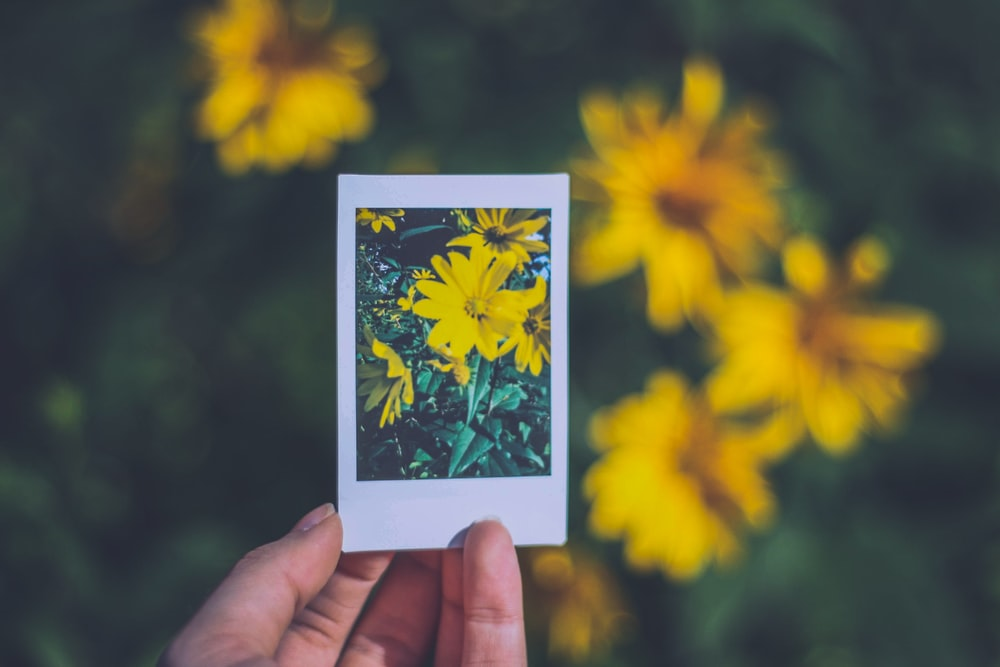 person holding photo of yellow flowers