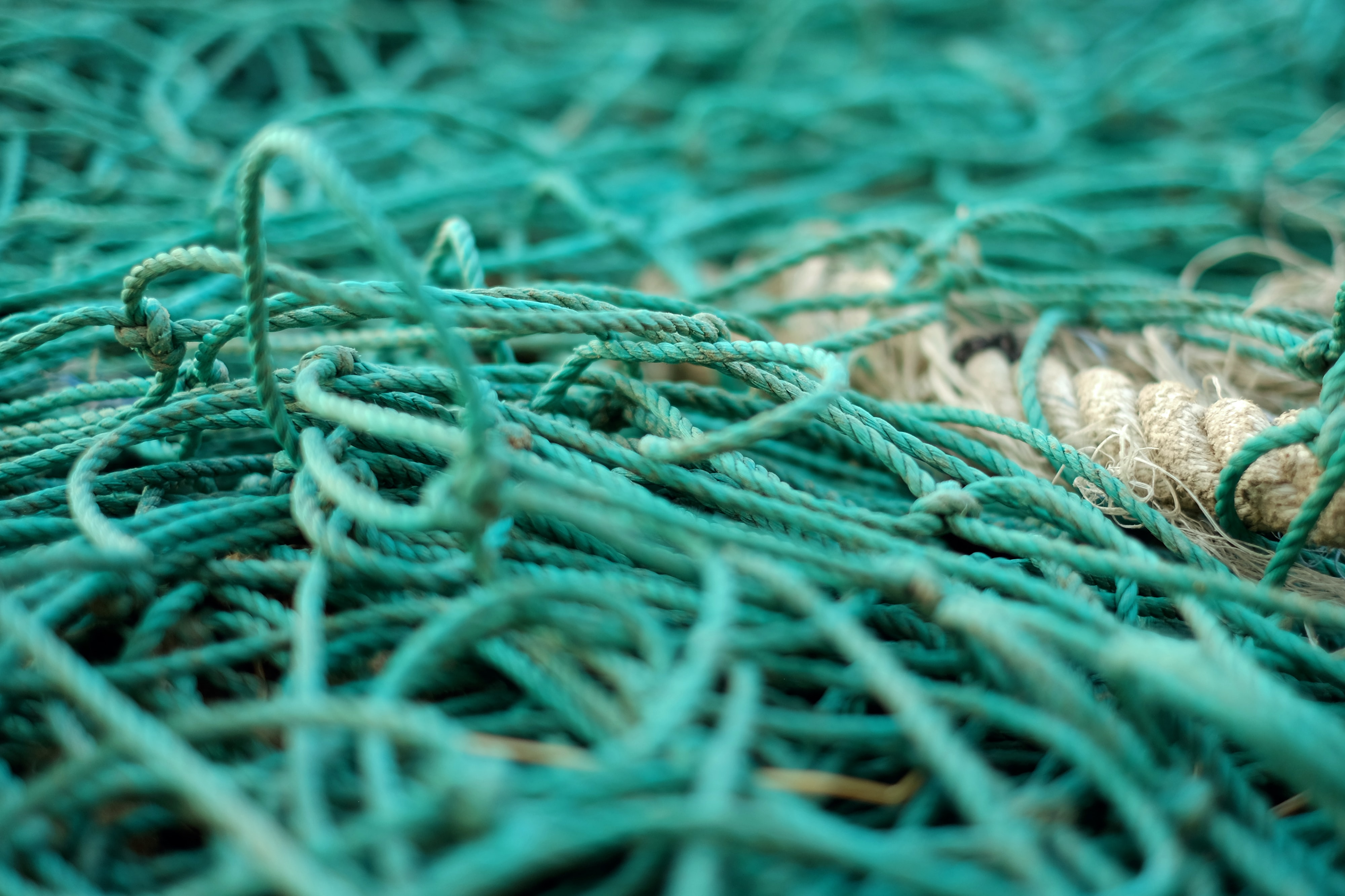 tilt shift photography of green ropes