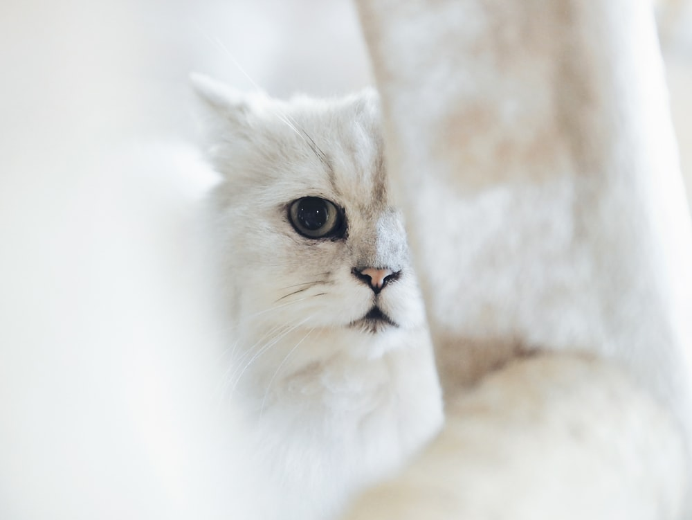 view of white cat
