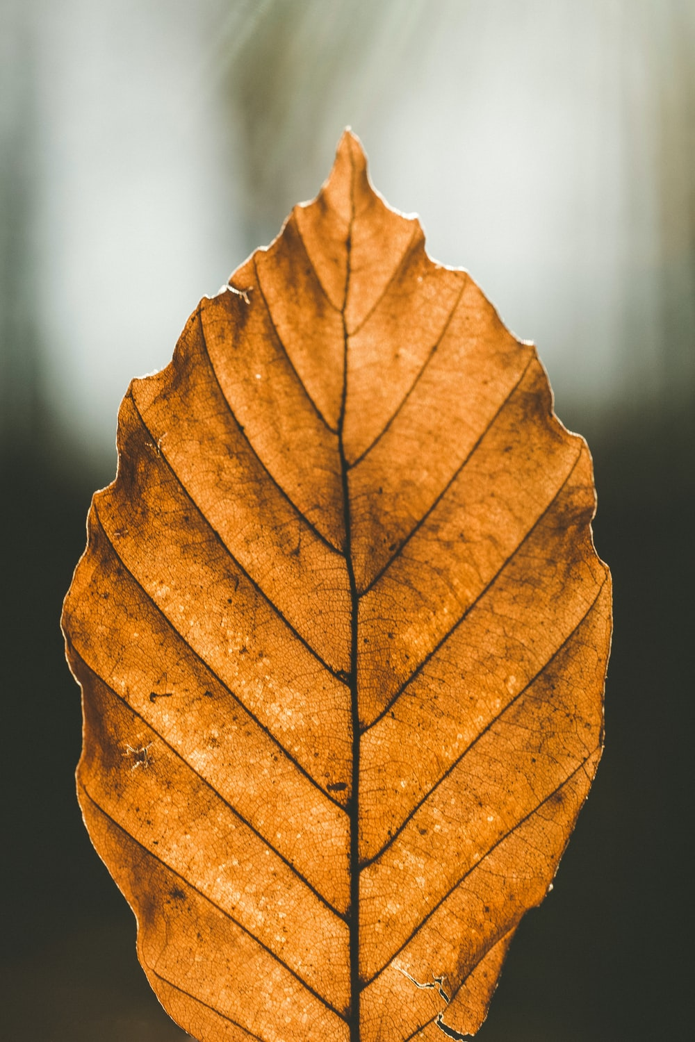 closeup photo of brown leaf