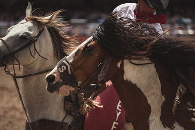 two brown and white horse running on field cowboys teams background