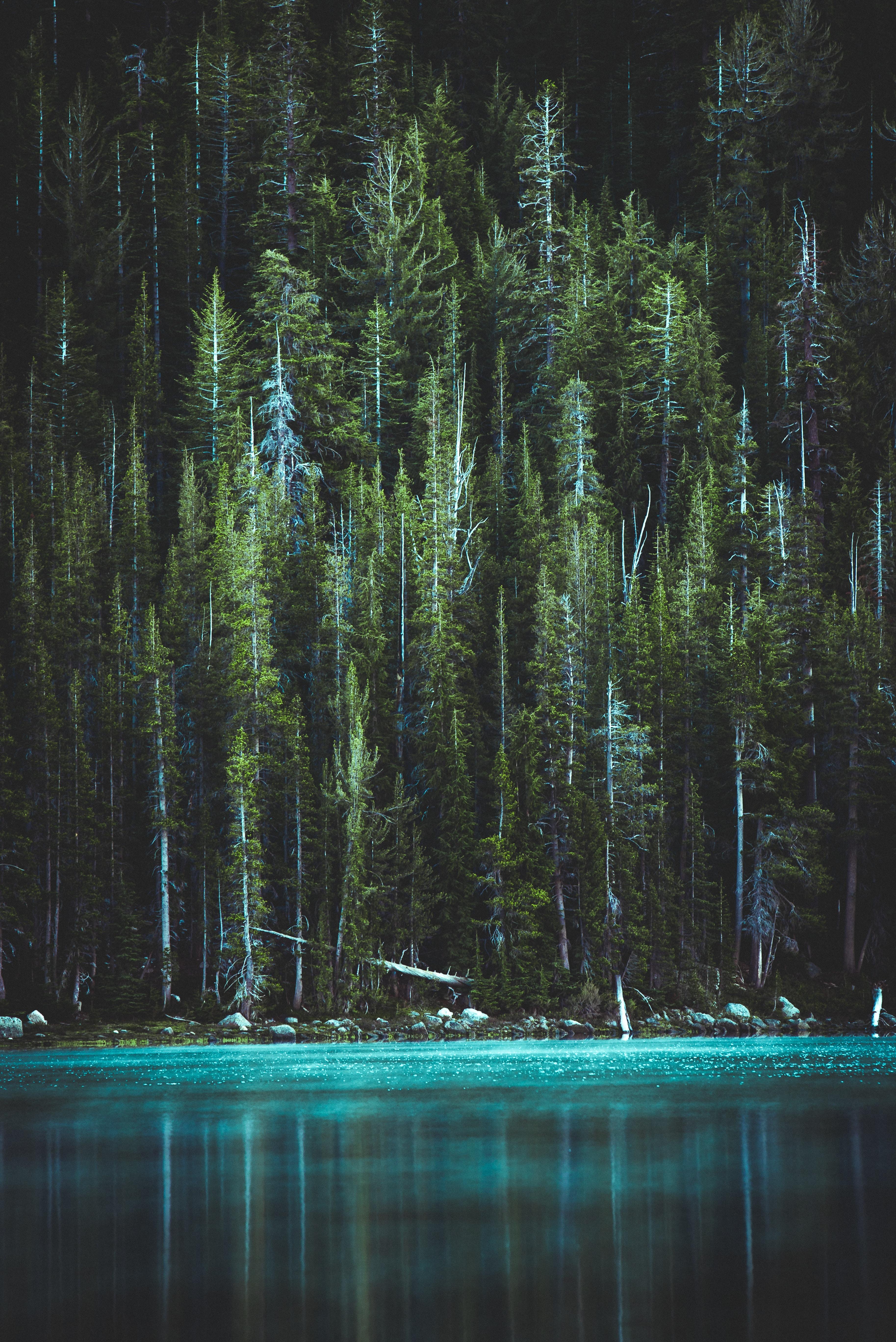 dark aesthetic forest wallpaper