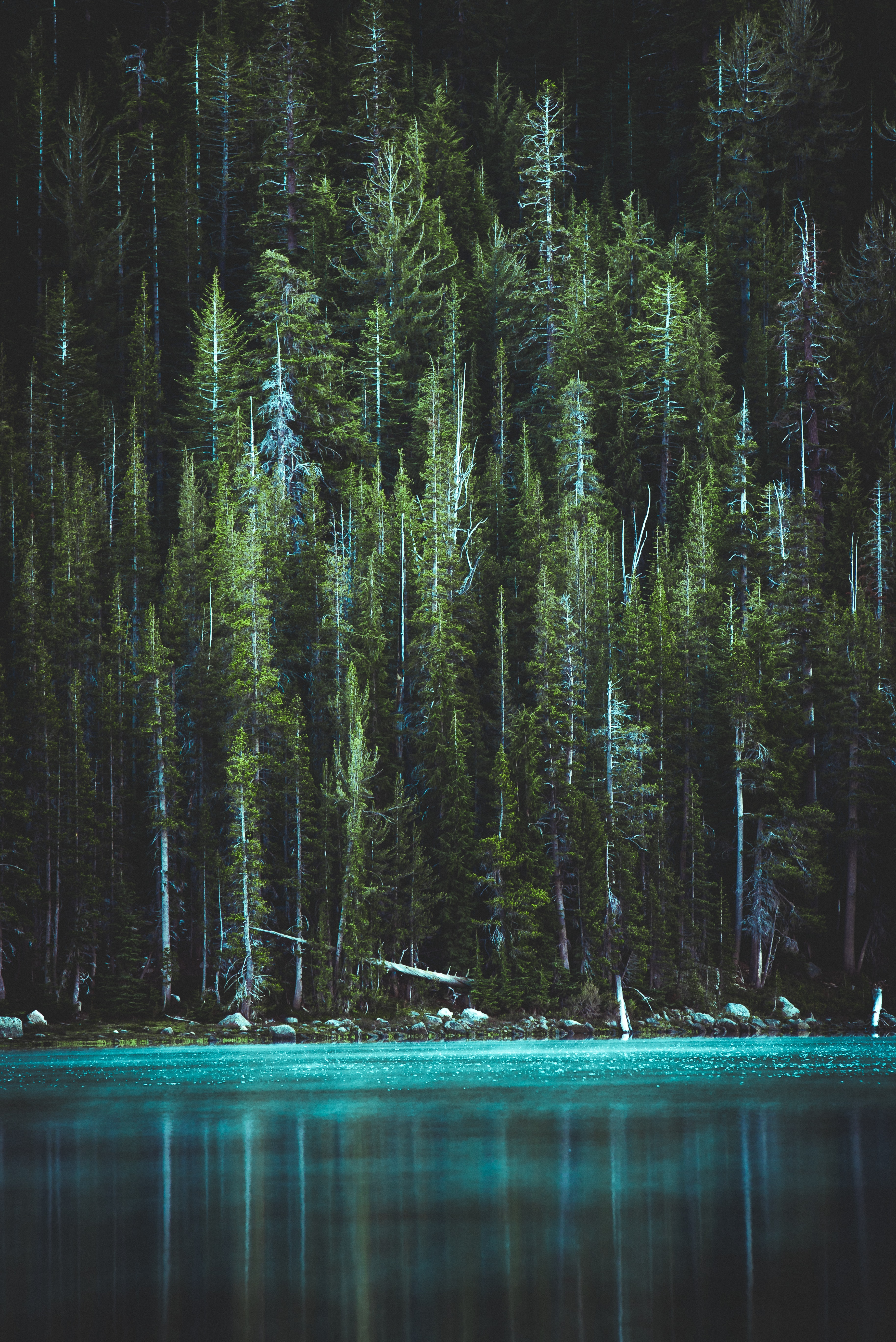 pine trees and blue lake
