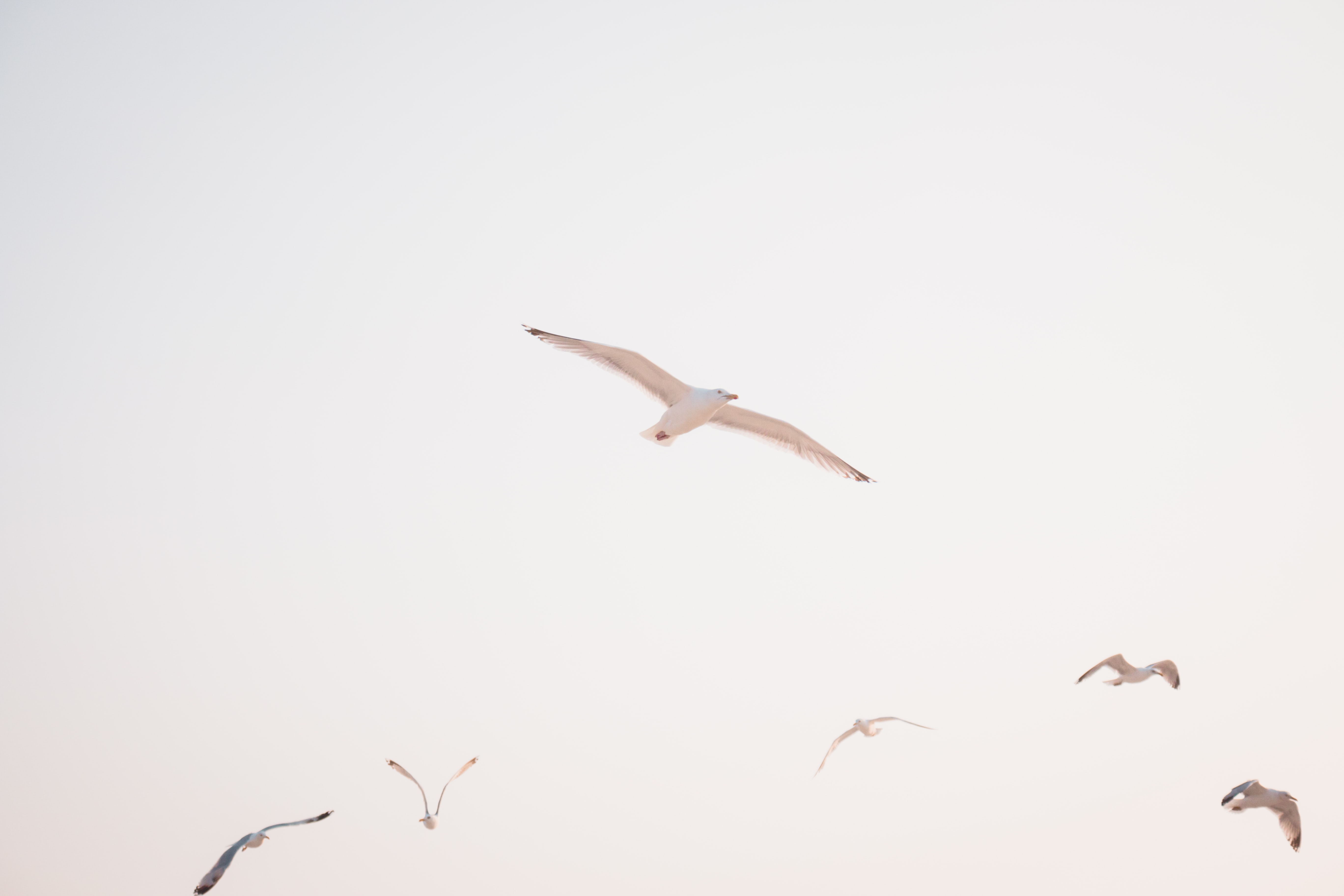 low angle photography of flying bird