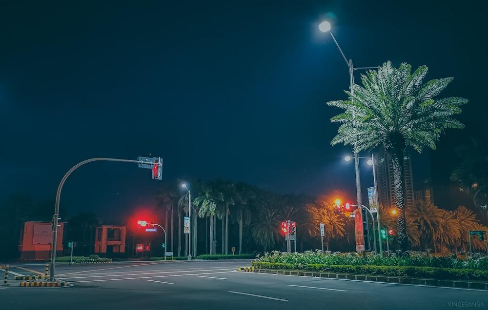 palm tree near road and traffic light
