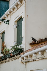 Pigeon on tiles in Venice