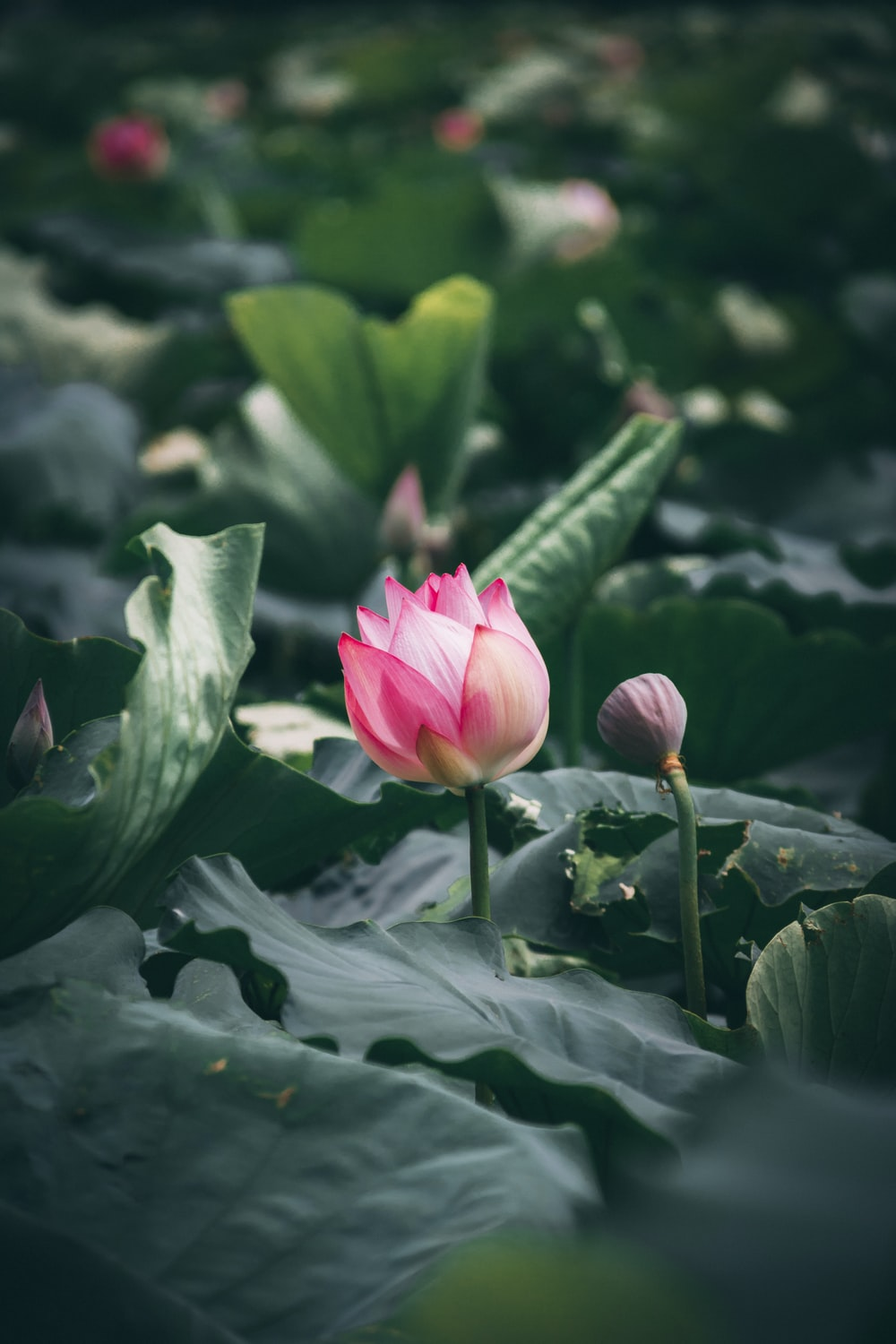 Flower Lily Plant And Flora Hd Photo By Xuan Nguyen At Darthxuan