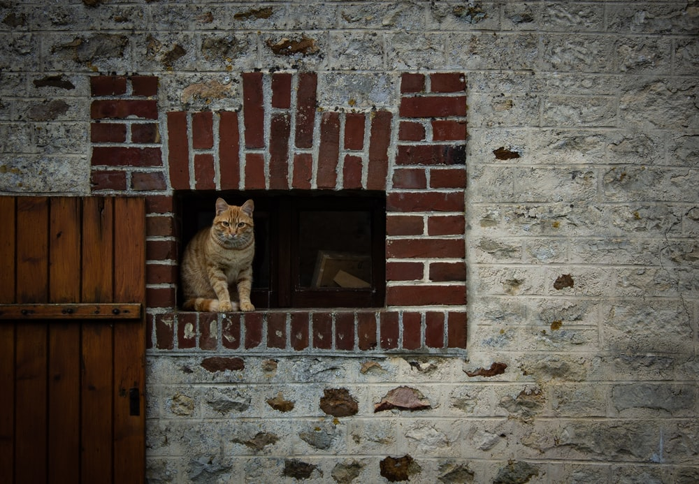 orange tabby cat standing on window