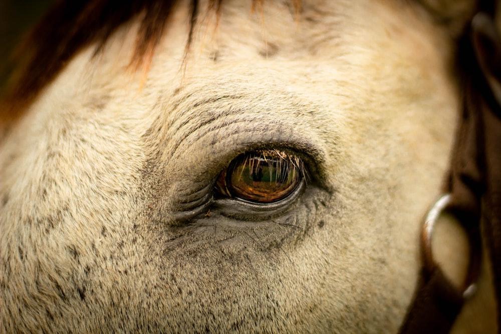 selective focus photography of horse eye