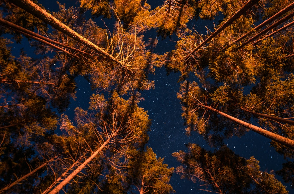 brown trees under the starry night