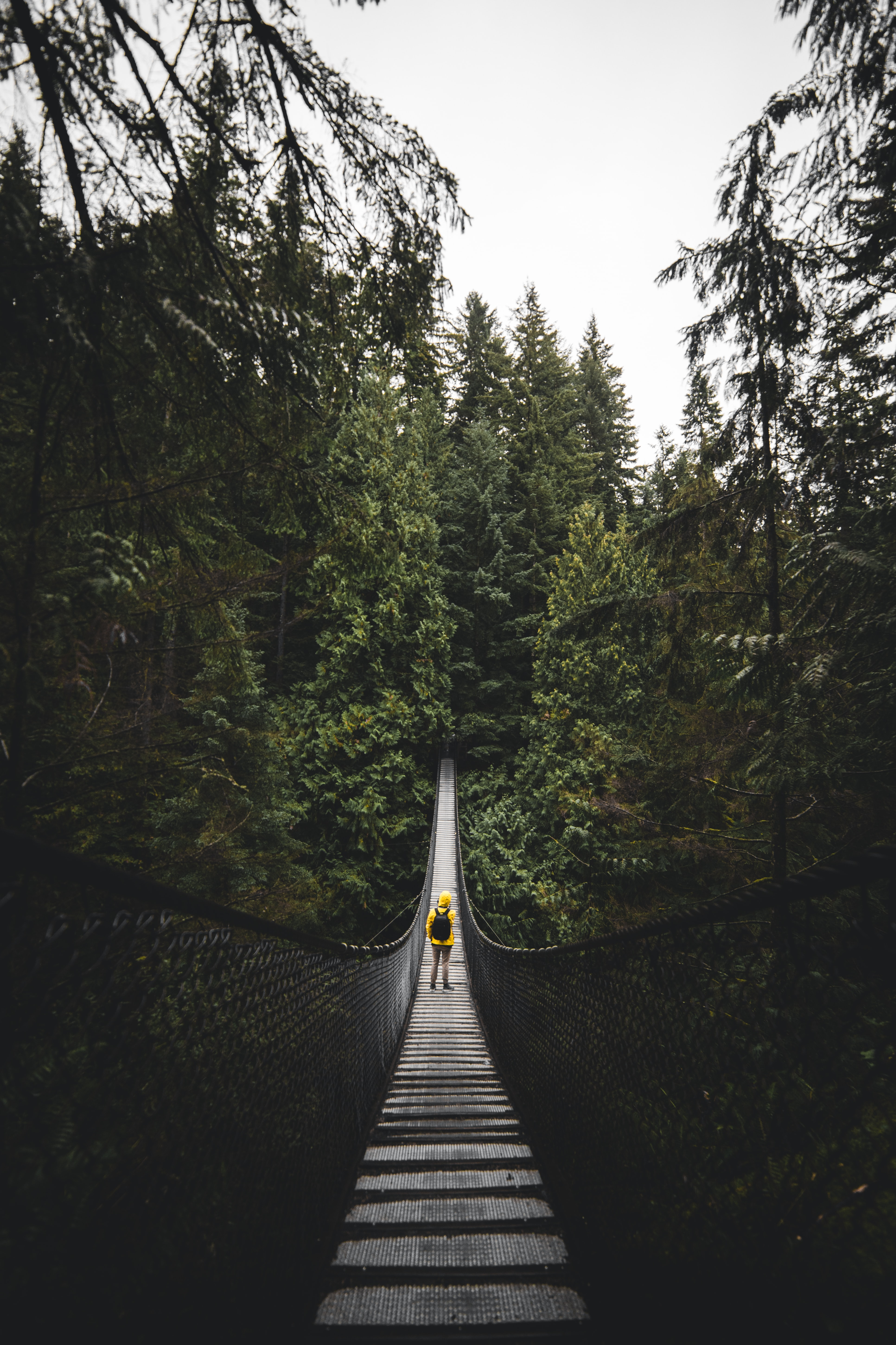 person standing in the center of hanging bridge at daytime