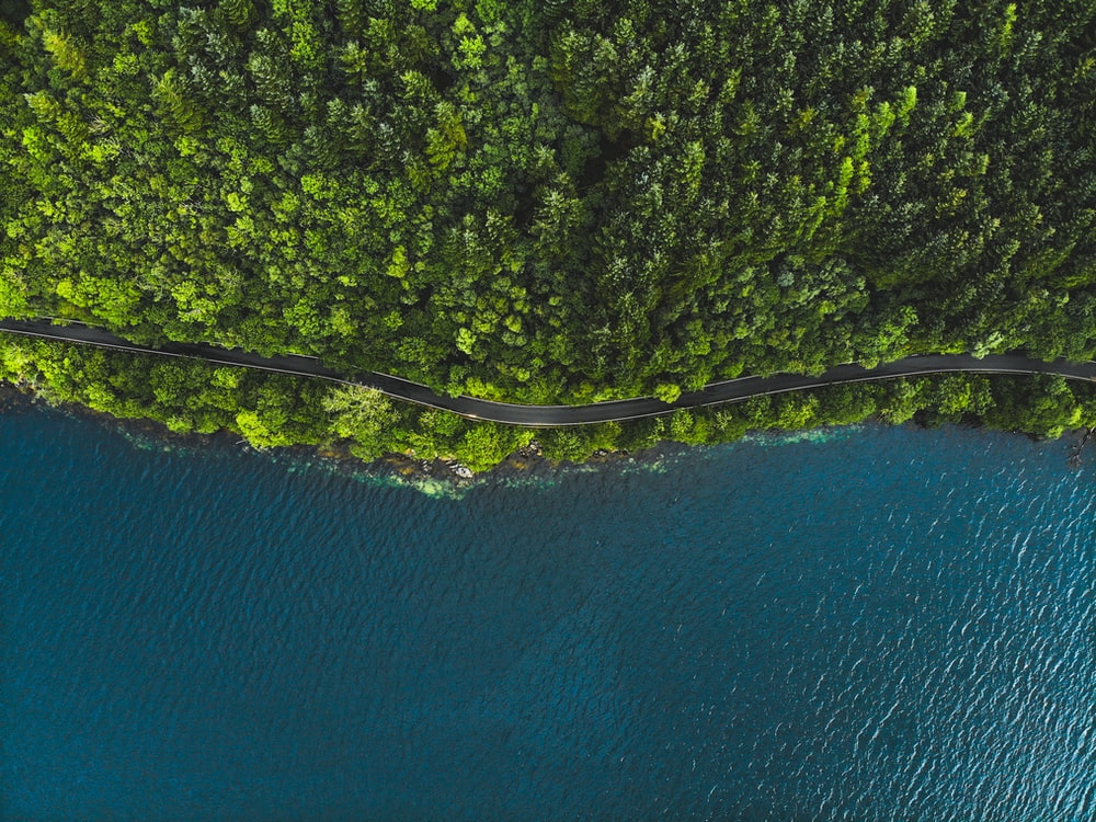 aerial photo of trees near body of water